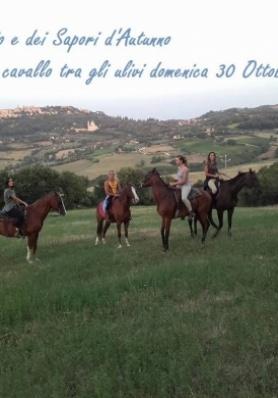 Passeggiata a cavallo tra gli ulivi - FESTA DELL'O ...